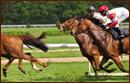 Pferdewetten Deutschland